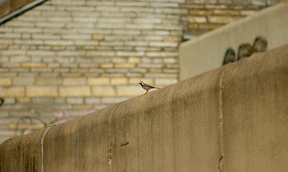 Linhall-bird