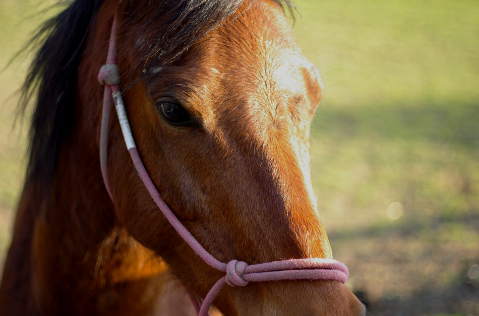 horse-2012