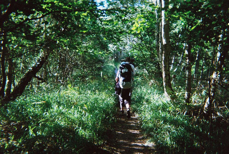 13-woodlands