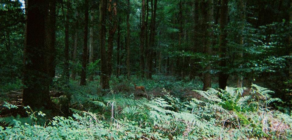 26-deer