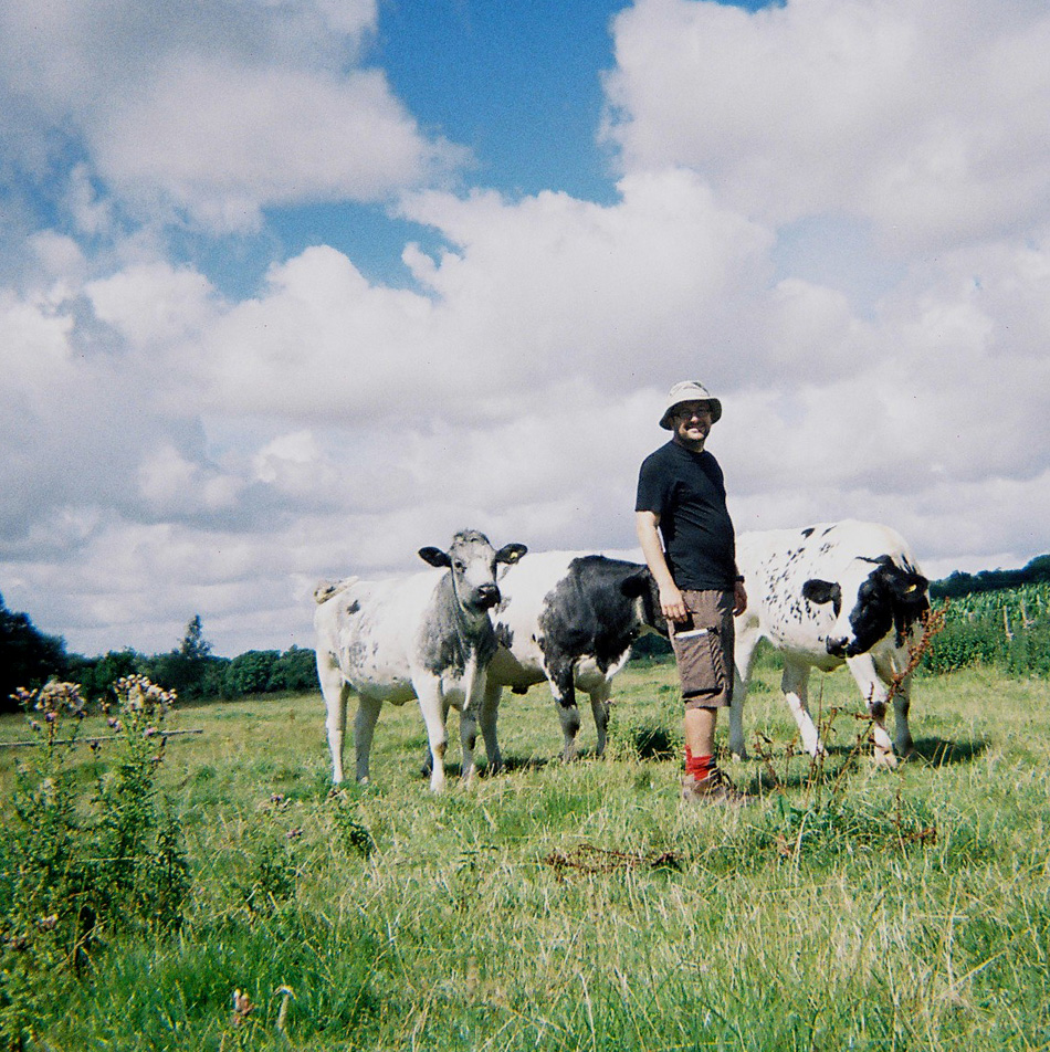 29-winchester-cows