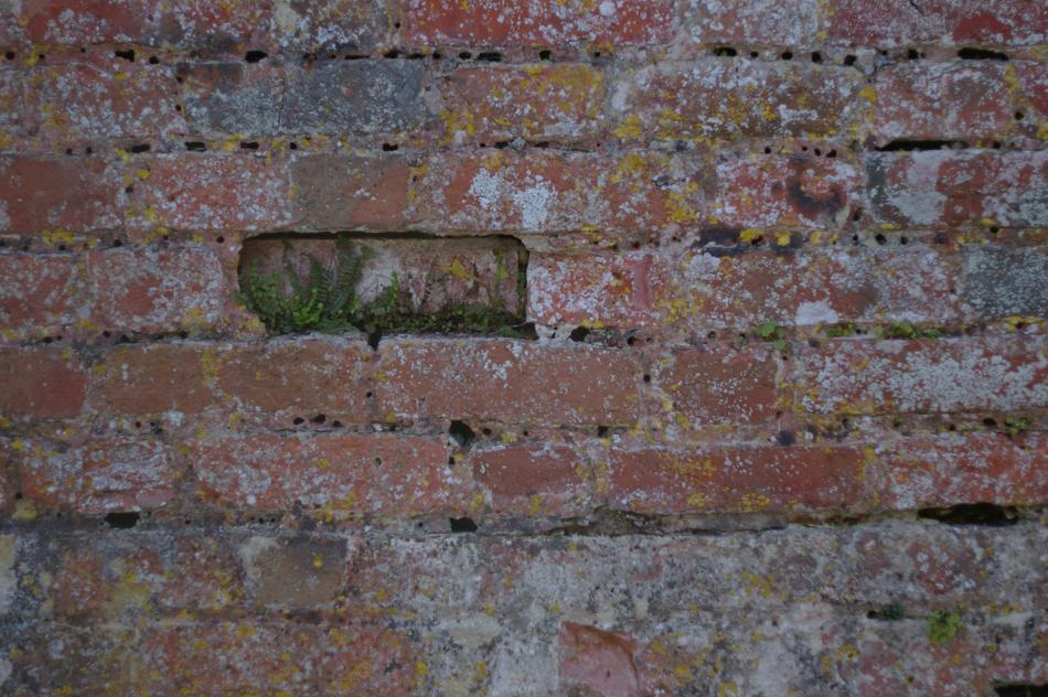 bricks with ferns-1