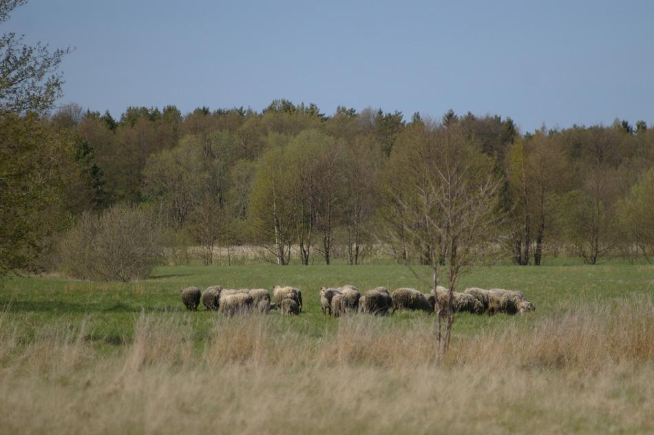 einar-flock